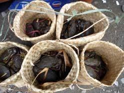 crab sales ladys2.jpg