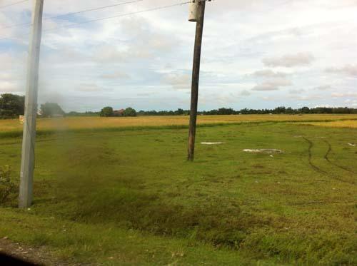 panay rice fields.jpg