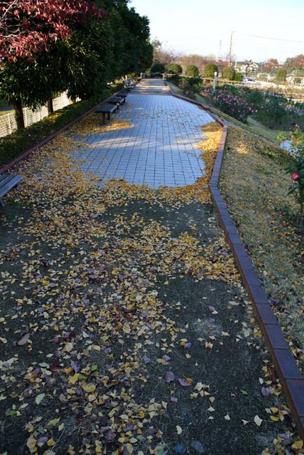 rose park  7.jpg