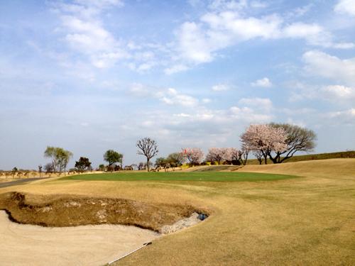 sakura golf.jpg