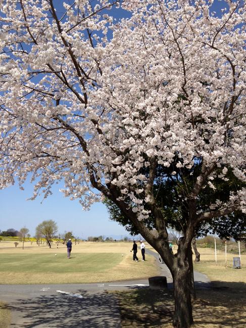 sakura golf2.jpg