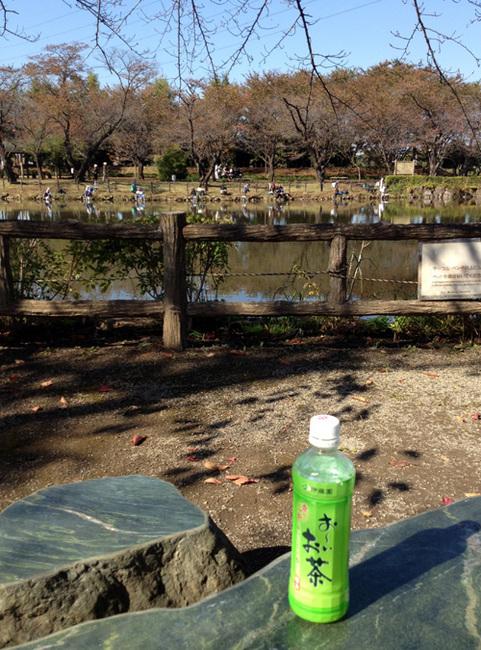 turugashima park2.jpg