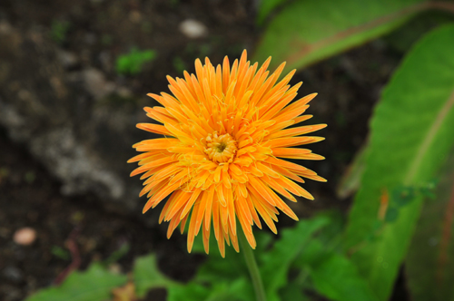 pg flower.jpg