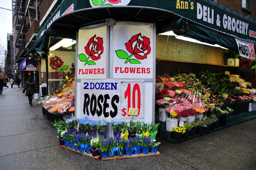 NY rose 24=10$ small.jpg