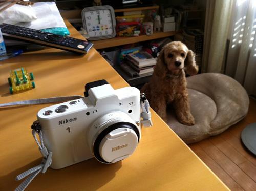 Nikon1 na dmon.jpg