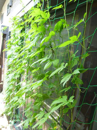 green curtain 1.jpg