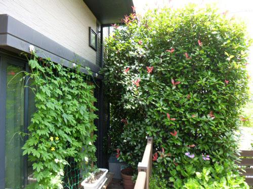 green curtain 4.jpg