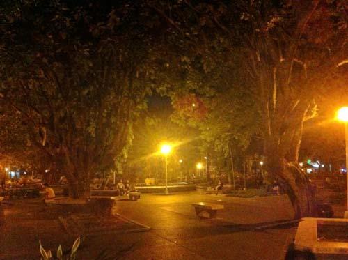 night walk6.jpg