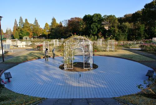 rose park   9.jpg