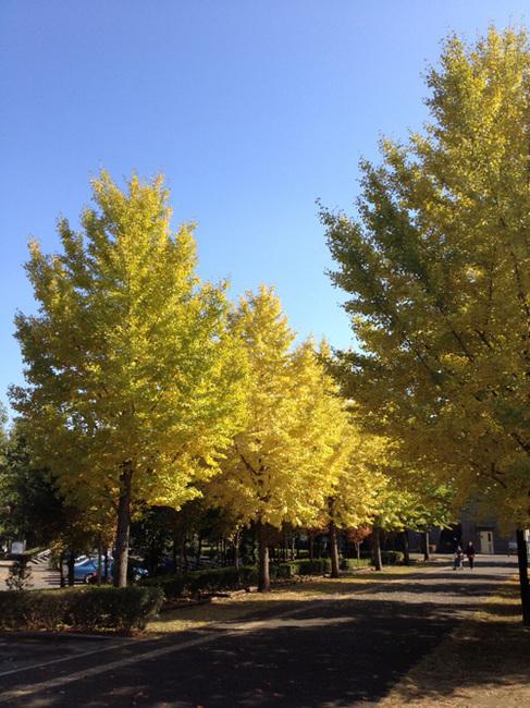 turugashima park4.jpg