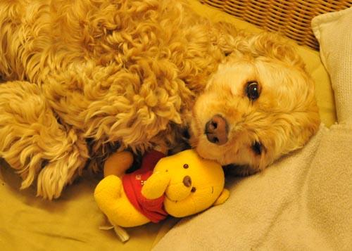 mon pooh.jpg