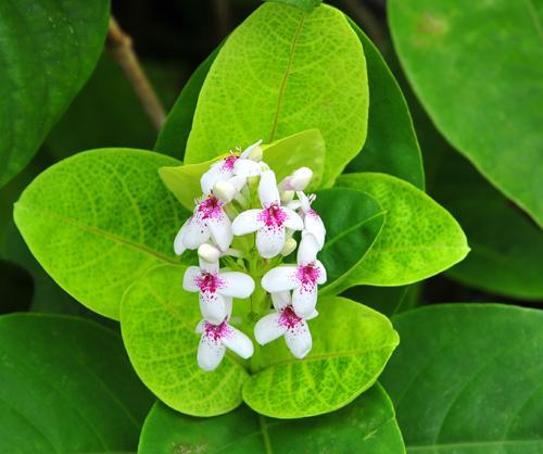 pg green flower.jpg