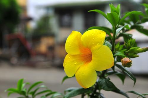 pg yellow.jpg